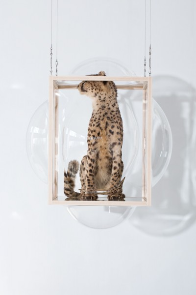 LARGE-hanging-showcase-curatorcabinet-cheetah2-Studio_Thier&VanDaalen-landyel